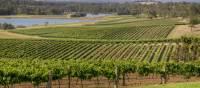 Scenic view of Audrey Wilkinson Vineyard, Pokolbin | Destination NSW