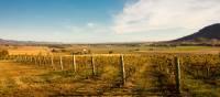 Cycle past rural vineyards in Mudgee | Destination NSW