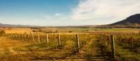 Cycle past rural vineyards in Mudgee   Destination NSW