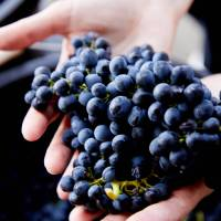 Learn more about the wine making process when visiting Pokolbin in the Hunter Valley | Destination NSW