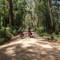 Beautiful forest lines the road to the Belmore Falls | Kate Baker