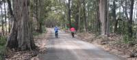 Country lanes on the South Coast Cycle | Kate Baker