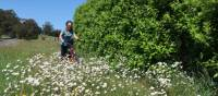 Cycling through spring flowers in the Southern Highlands | Kate Baker
