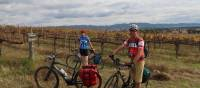 Cyclists in the vines at the Moothi Estate in Mudgee   Ross Baker