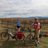 Cyclists in the vines at the Moothi Estate in Mudgee | Ross Baker