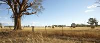Cycle past classic Victorian high country landscapes near Rutherglen | Ewen Bell