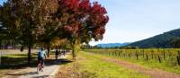 Cycling past a vineyard near Bright on the Murray to Mountains Rail Trail in Victoria | Josie Withers