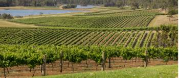 Scenic view of Audrey Wilkinson Vineyard, Pokolbin | Destination NSW
